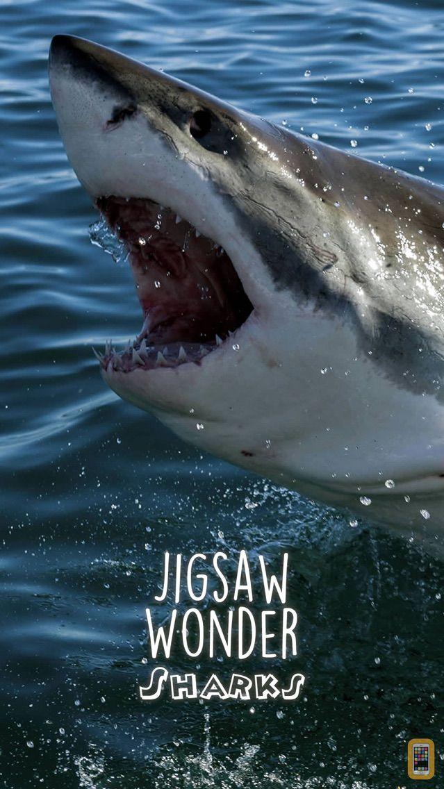 Screenshot - Shark Puzzles for Kids Jigsaw Wonder Collection