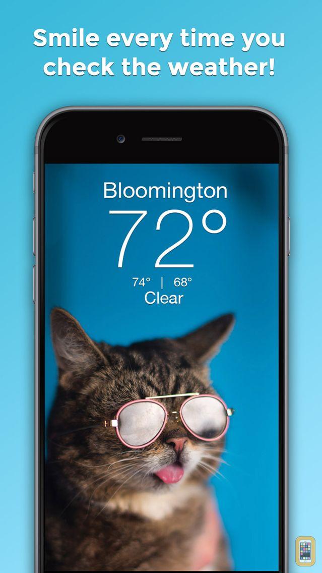 Screenshot - Lil BUB Cat Weather Report