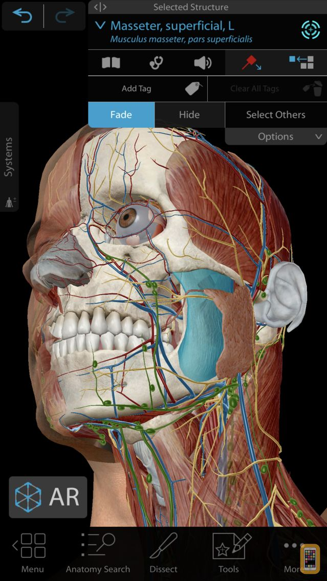 Screenshot - Human Anatomy Atlas 2021