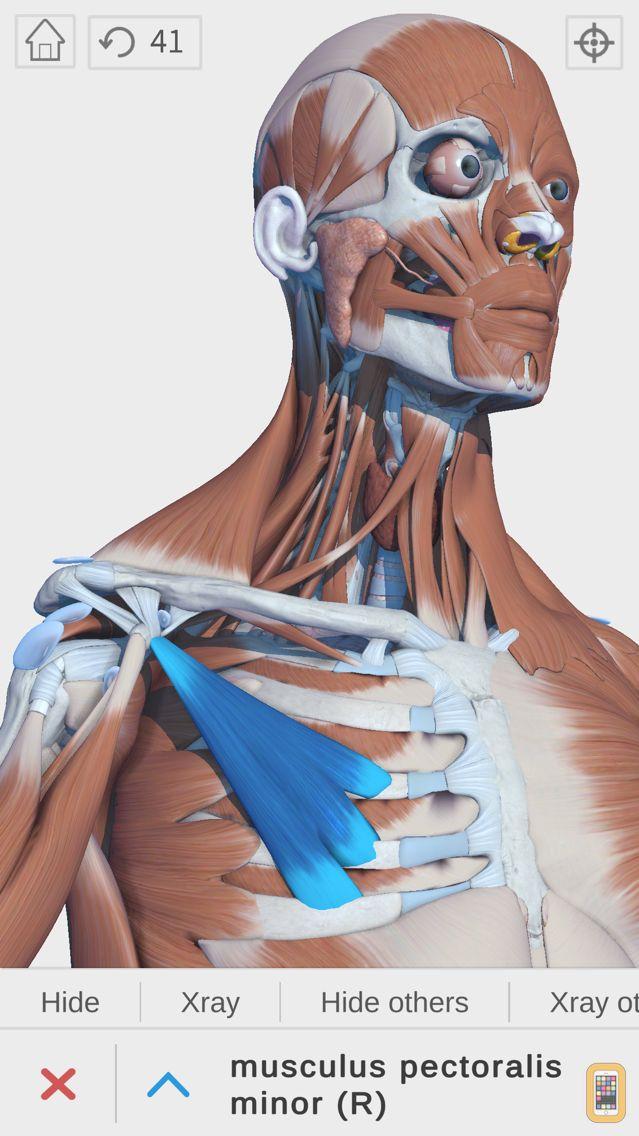 Screenshot - Visual Anatomy 3D | Human