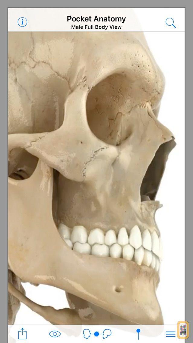 Screenshot - Pocket Anatomy