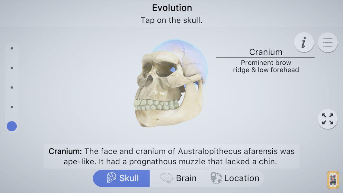 Screenshot - Brainapse