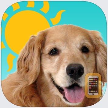 Sundoggy by Design Engine L.A. (Universal)