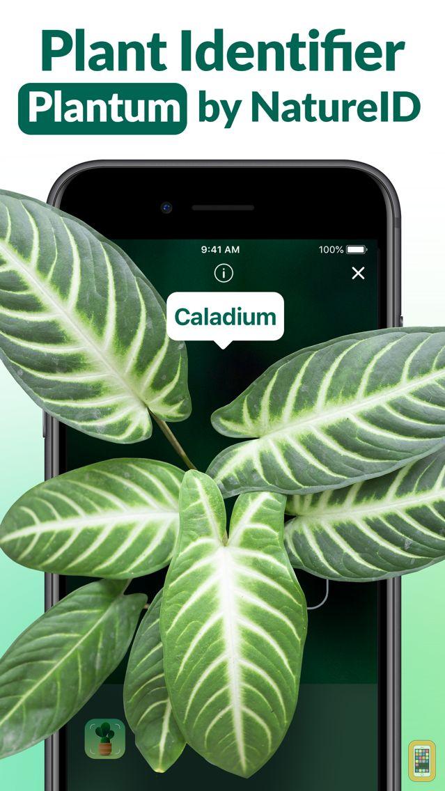 Screenshot - Plant Identifier - Leaf Snap