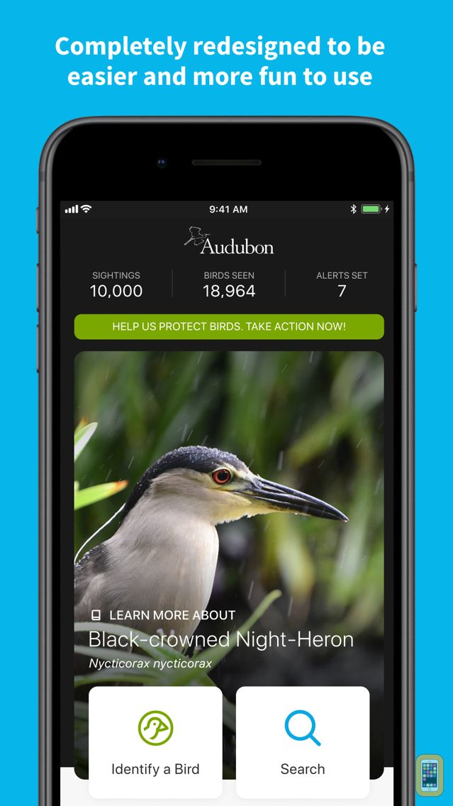 Screenshot - Audubon Bird Guide