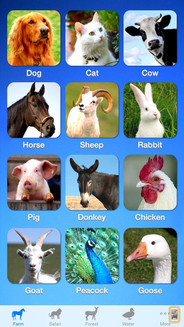 Screenshot - ZOOLA Animals