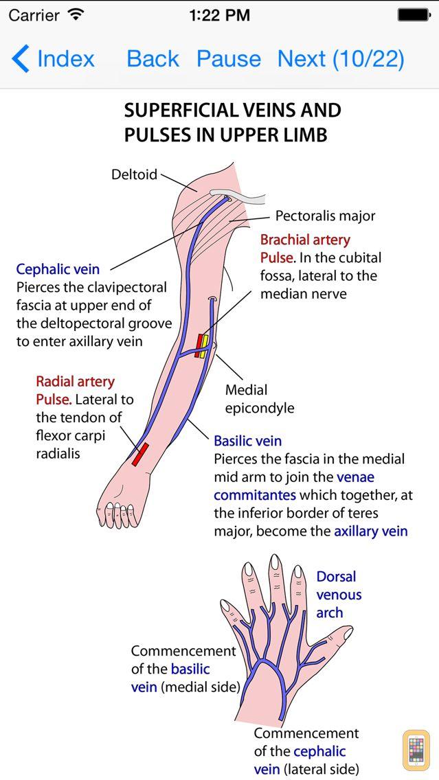 Screenshot - Anatomy Lectures Limbs