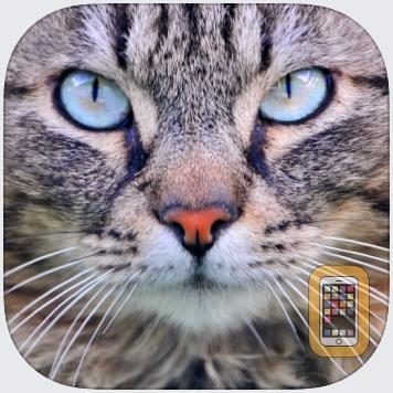 Cat Sounds & Tail Talk - Meows, Toy & Translator by iGreenEarth (Universal)