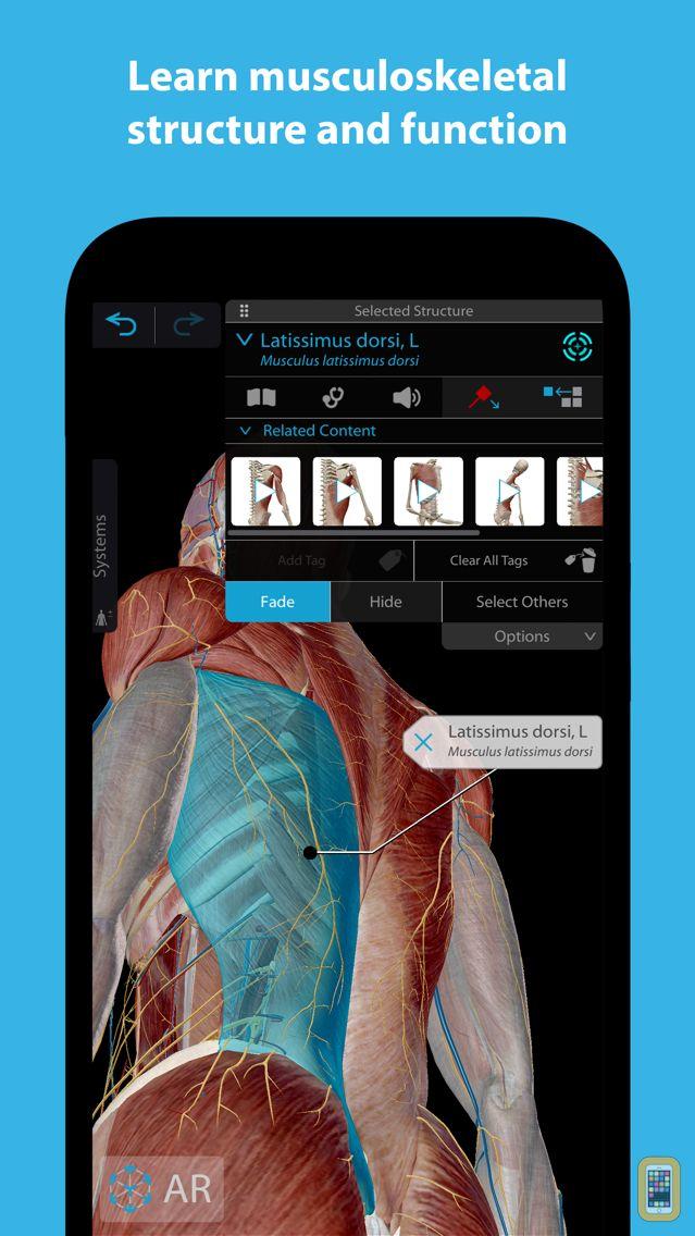 Screenshot - Muscles & Kinesiology