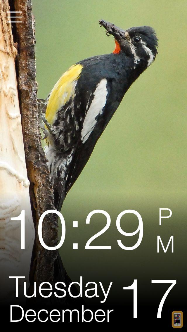 Screenshot - Daily Bird - the beautiful bird a day calendar app