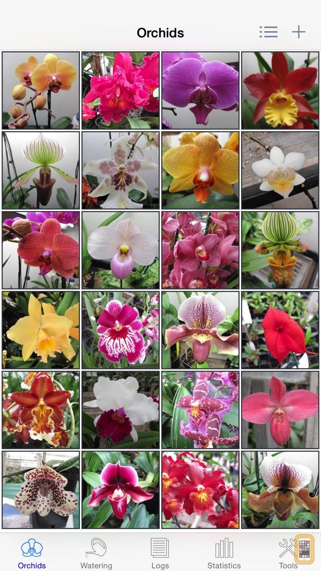 Screenshot - Orchid Album